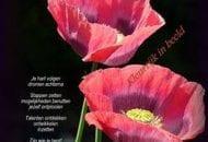 compositie-rozen
